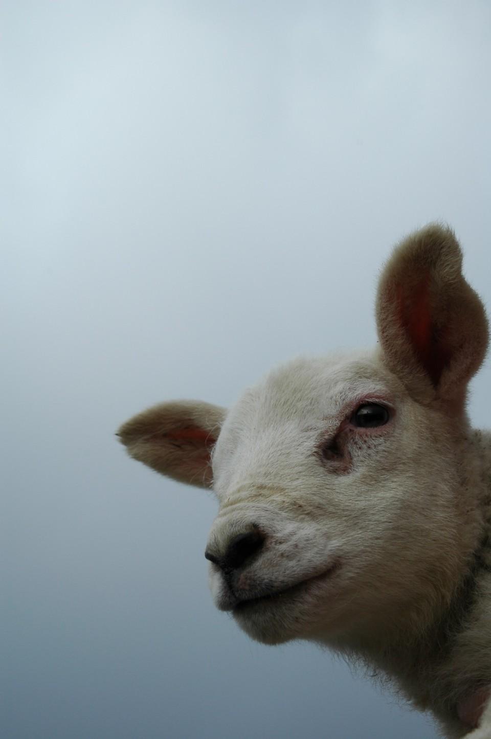 beaquoy lamb+sky