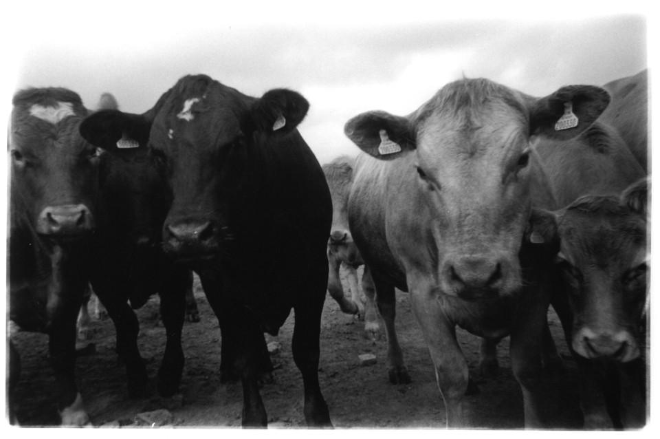 jim seatter herd