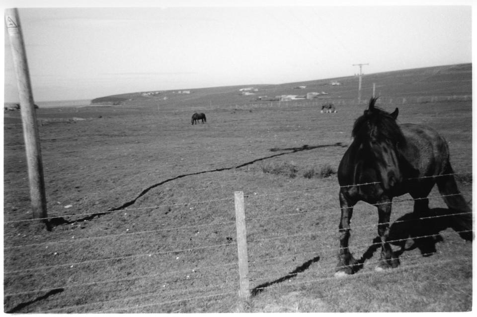 suki.horse&pole