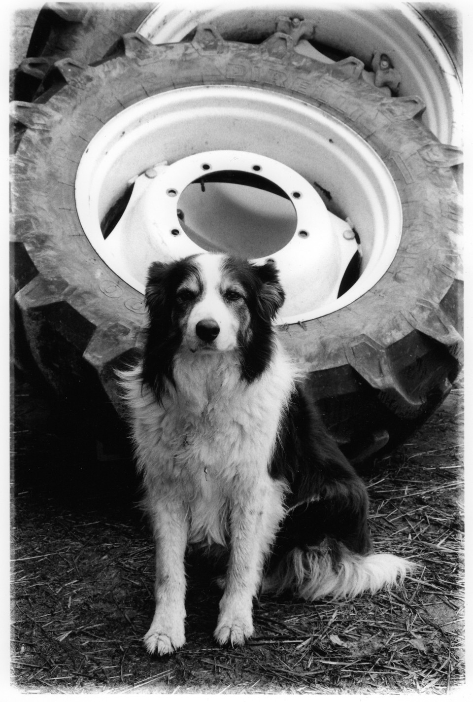 The Anderson's Collie