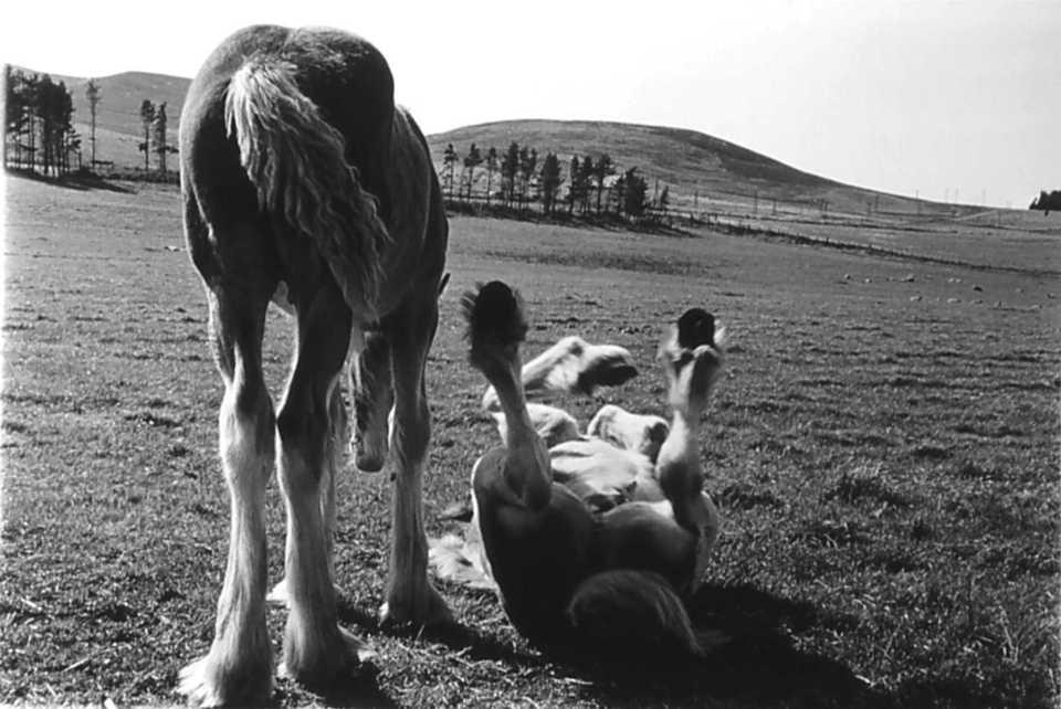 rolling-foal