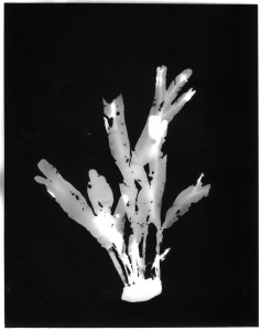 seaweedstone2
