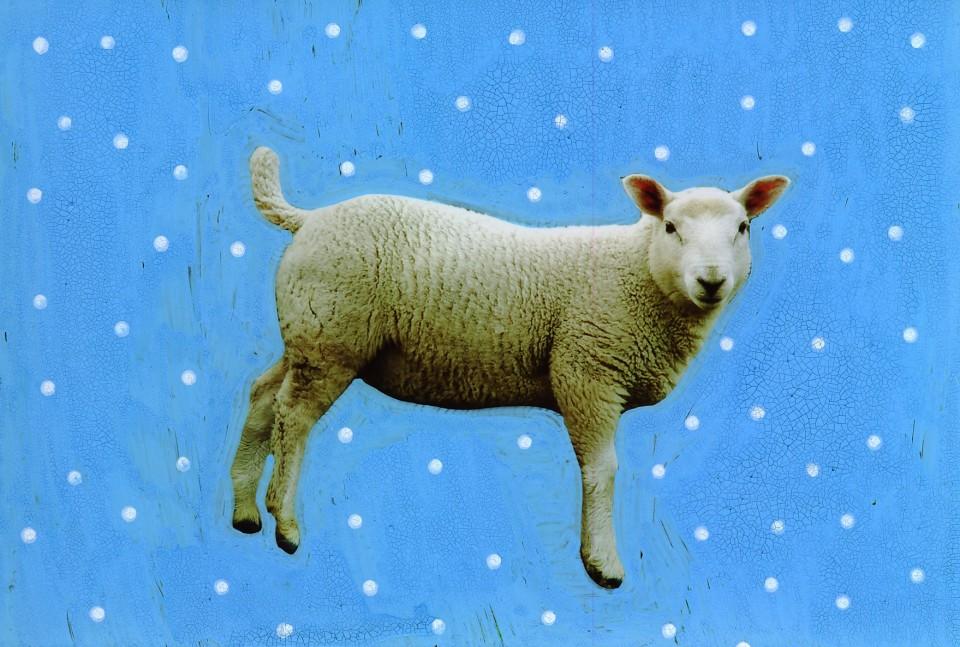 blue-lamb